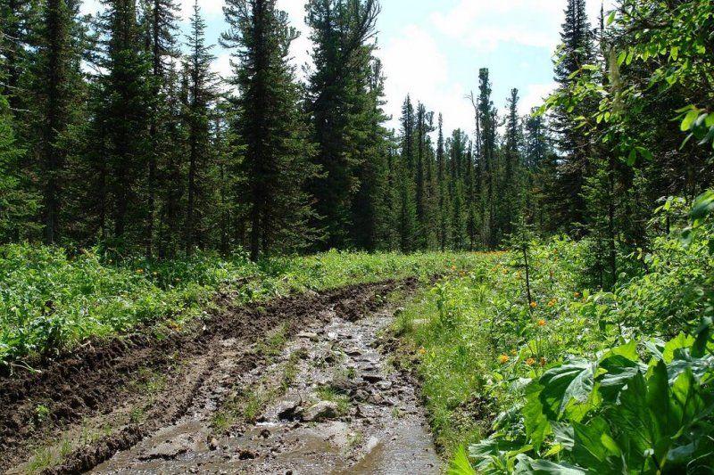 Такая дорога до гор.jpg